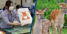 Japan Uses Deer-Friendly Bags To Stop Animals Eating Plastic