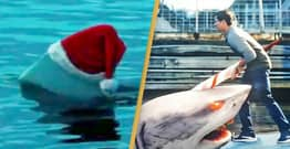 Santa Jaws, A Film About A Killer Shark In A Santa Hat, Is Streaming On Amazon Now