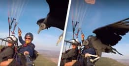 Vulture Hitches Ride On Paraglider's Selfie Stick In Once In A Lifetime Footage