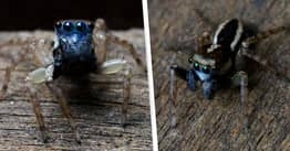 Woman Discovers New Species Of Venomous Spider With Eight Eyes In Backyard