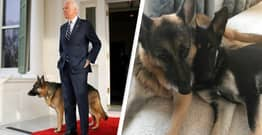 Joe Biden's Family Dogs Have Got Their Own Official Twitter