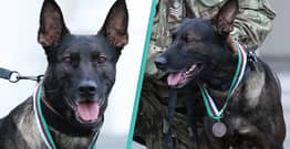 Hero Dog That Took Out Al-Qaeda Gunman Awarded Animal's Victoria Cross Medal