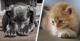Animal Abusers In Australia Will Face 2 Years In Prison And $110,000 Fine