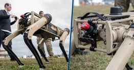 US Military Base In Florida To Deploy Patrolling Robotic Dogs