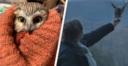 Baby Owl Rescued From Rockefeller Christmas Tree Released Into The Wild