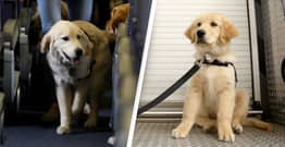 Airlines Can Now Ban Emotional Support Animals From Flights
