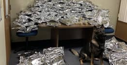 Police Dog Uncovers Storage Unit Full Of Drugs In Ohio