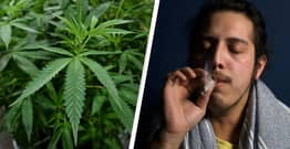 Long-Term Cannabis Use Leads To Reduced PTSD Symptoms, Study Shows