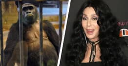 Cher Working To Free Gorilla Who Spent Most Of Its Life In Mall Zoo