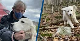 Man Uses Drone To Find Dog Lost In Woods For 10 Days