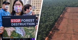 Amazon Deforestation Soars To 12-Year High