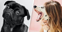 Your Dog Doesn't Actually Know What You're Talking About