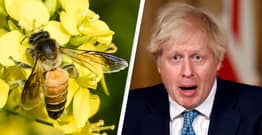 UK Government To Let Farmers Use Bee-Killing Pesticide Banned In EU