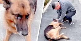 Retired Police Dog 'Cries' After Being Reunited With Handler