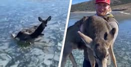 Utah Fishermen Risk Their Lives To Rescue Baby Deer Stranded On Frozen Lake