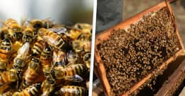 15 Million Bees Could Be Seized And Burned Due To Brexit Rules