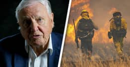 David Attenborough Warns It's 'Too Late' To Reverse Climate Change Damage