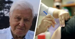 Sir David Attenborough Says Anti-Vaxxers Are The 'Ignorant' Minority