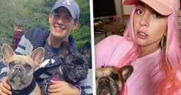 Lady Gaga's Dogwalker To Make Full Recovery After Being Shot Four Times