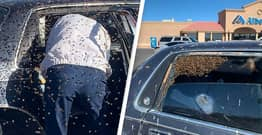 Off-Duty Firefighter Saves Man From Swarm Of 15,000 Bees That Flew Into His Car