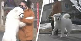 Dog Stops Traffic To Save Owner After They Have A Seizure