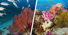 Fiji's Coral Reefs Thriving Again After Being Destroyed By Cyclone