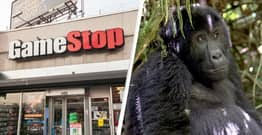 Reddit Stock Traders Are Using Their GameStop Wealth To Help Save Gorillas