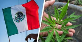 Mexico Passes Bill To Legalise Marijuana, Set To Become World's Largest Cannabis Market