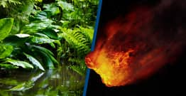 Asteroid That Killed Dinosaurs Created Amazon Rainforest, Study Suggests