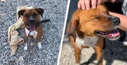 Dog Rescued From Shelter After 419 Days Returned One Day Later Because He Was 'Too Much Work'