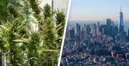 New York Set To Become One Of Largest Legal Cannabis Markets