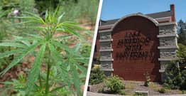 University In Michigan Becomes First In US To Offer Cannabis Chemistry Scholarship