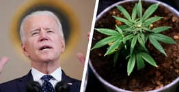 White House Says Joe Biden Supports Decriminalising Recreational Marijuana