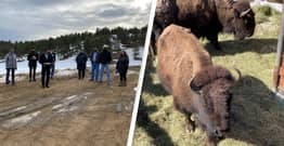 Denver Donates Bison To Tribal Nations In Hope Of Reintroducing Them To Their Native Habitat