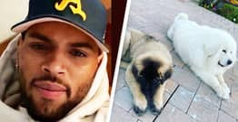 Chris Brown Sued By Cleaner Who Claims Pet Dog Attacked Her Sister