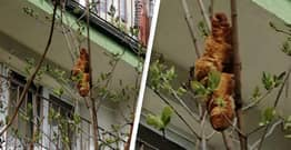 Mysterious Tree Creature That Terrified Krakow Locals Turns Out To Be Croissant