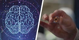 Brain Chips Could Allow Companies To Harvest Our Memories Warns Expert