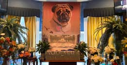 7-Year-Old Pug Dexter Gets Extravagant Funeral For Being A Good Boy