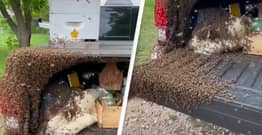 TikToker Wakes Up And Finds Van Covered In Bees