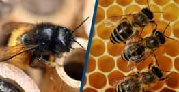 Scientists Train Bees To Detect Coronavirus In Seconds
