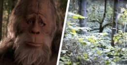 Man Shares Footage Of 'Bigfoot Sighting' He Filmed While Hiking