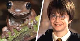 Real-Life 'Chocolate Frog' Discovered In New Guinea Rainforest