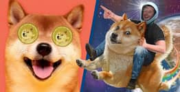Will Dogecoin Crash? How To Buy And Latest Price