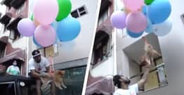 YouTuber Arrested For Making Dog Fly With Helium Balloons