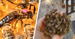 Fearless Woman Clears Swarm Of Bees With Bare Hands Before Offering New Queen