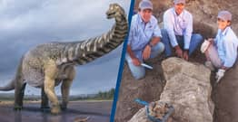 Basketball Court-Sized Dinosaur Species Is Largest Ever Found In Australia