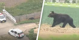 Wild Brown Bear Enters Military Camp And Wounds Four Before Being Shot