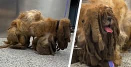 Hero Vets Relieve Stray Dog From 6 Pounds Of Matted Hair