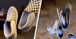 Vans Always Do The Same Thing When You Throw Them