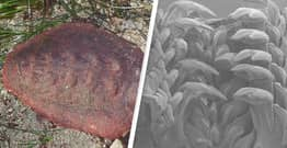 'Wandering Meatloaf' Mollusk Has Teeth Made From Mineral Seen Only Before In Rocks